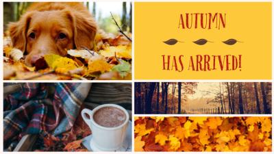 Favorite Fall Festivities