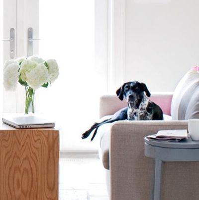 Is Your Home Pet Friendly?
