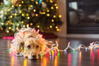 Pet Proofing Your Home for the Holiday