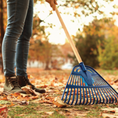 LEAVE IT BE? WEIGHING YOUR FALL CLEAN-UP OPTIONS