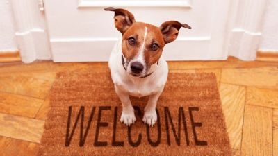 How Pets can help sell your home