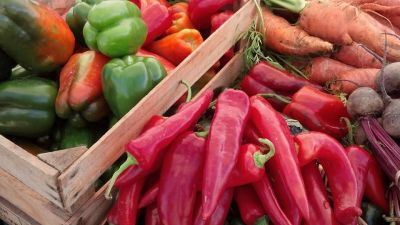 Miami Shores May Allow Front Yard Vegetable Gardens