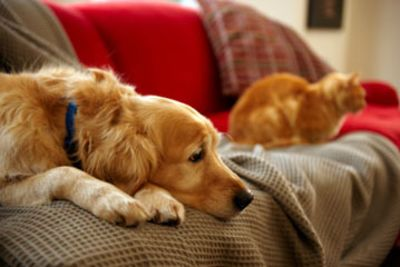 3 Tips to Selling a Home with Pets