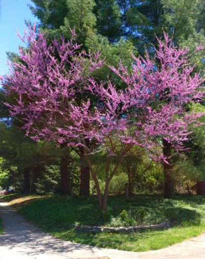 5 Trees That'll Withstand the Worst Storms and Still Look Gorgeous