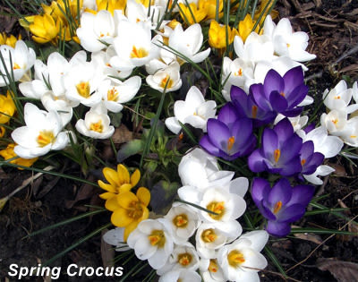 New England Gardening Advice By the Month -April