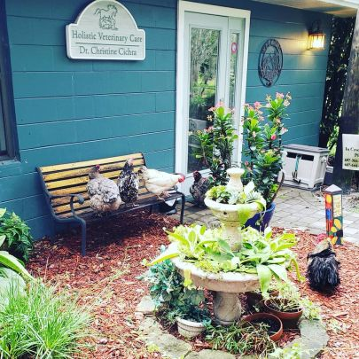 Local Loves | Holistic Veterinary Care of Central Florida