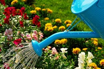 7 Water Saving Tips for your Yard