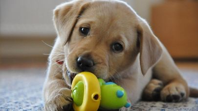 Must Love Dogs: Just How Important Are Pets In Your Home Search