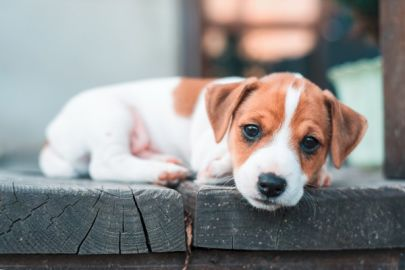 Have a pet? An evacuation plan is a necessity for every home
