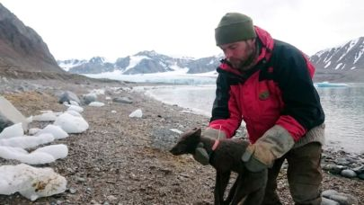 Journey of an Arctic Fox