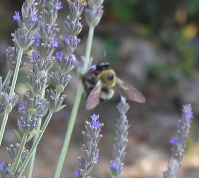 Your Brevard garden: Here's what to do in your yard and garden in October