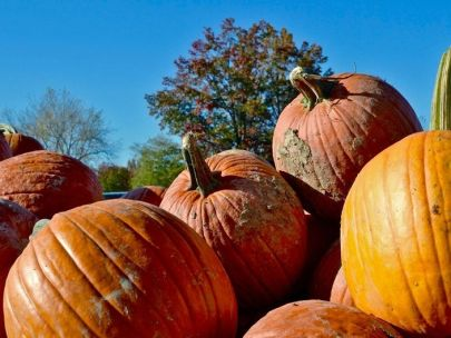 Best Pumpkin Patches 2019