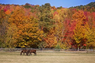 FALL TIPS FOR EQUINE OWNERS