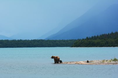 Bear Safety in Alaska