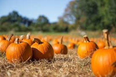 Snohomish County Pumpkin Patches