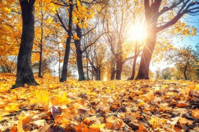 8 Things You Need to Prep Your Home for Fall: Do You Have Them All?