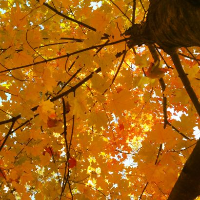 The Best Places to See Fall Leaves in Tuscaloosa