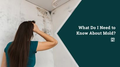 Mold Issues: What do I need to know