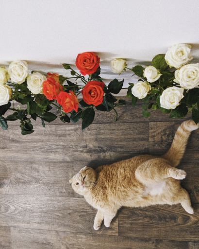 Bring The Outdoors Inside For Your Indoor Pets