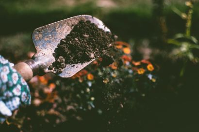 Tips to Achieve a Green Thumb Level Garden in Morristown!