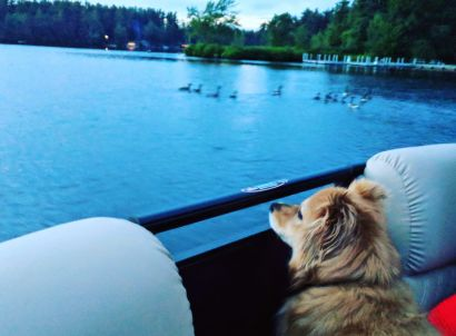 Take it From a Dog – Your Pet Probably Hates the 4th of July