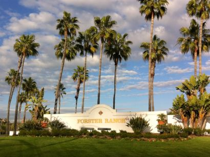 Forester Ranch LIVE Market Updates