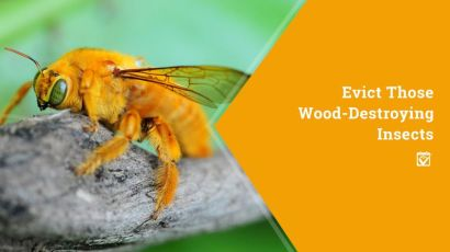 Evict Those Wood-Destroying Insects