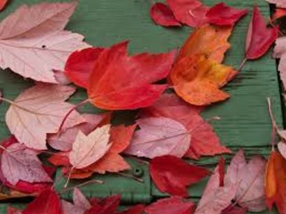 Tips For Getting Your Home Ready for the Fall