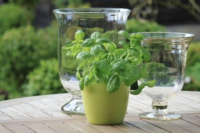 Herb Gardening Simple and Fun