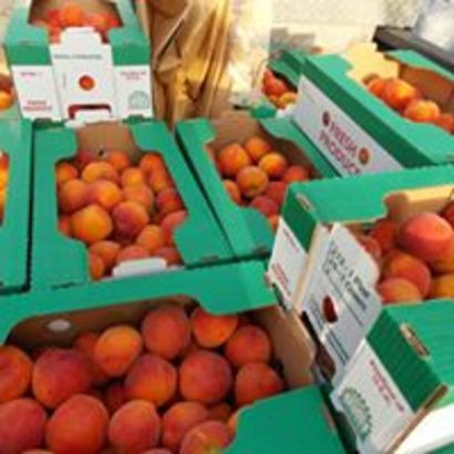 Florida-grown peaches? Yes, and you can pick them at Deer Park Peaches west of Melbourne
