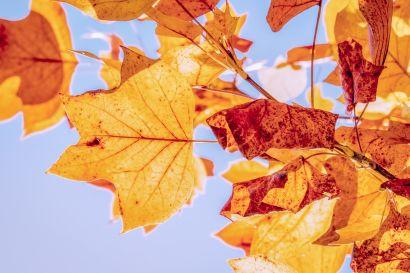 Fall Maintenance Checklist 2019