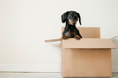 5 Suggestions for a Successful Move with Pets in Tow