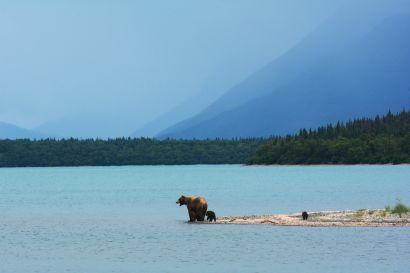 Bear Safety in Alaska