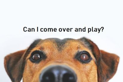 Your Home Going to the Dogs…or Cats?