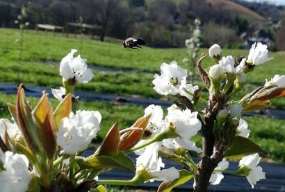 Bee Appealing – Improve Your Curb Appeal by Improving Your Bee Appeal