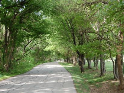 The Neighborhoods of Lovejoy ISD