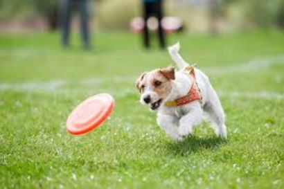 10 BEST DOG PARKS IN PALM BEACH COUNTY