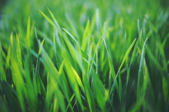 Get Green! How to Grow a Beautiful Lawn Your Neighbors Will Notice!