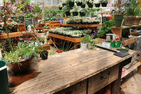 Best Local Nurseries and Garden Centers