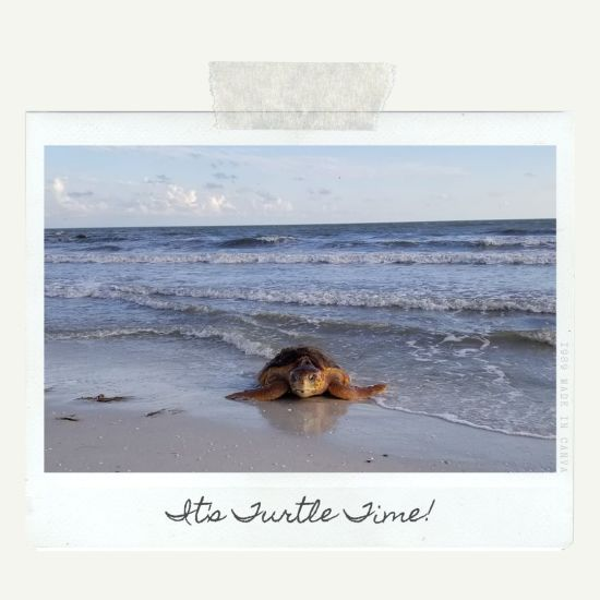 Turtle Nesting Season: Fort Myers Beach