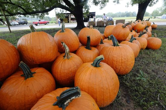 20 Things to Do in Charlotte for Halloween