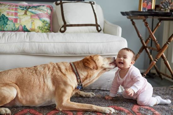 Dealing with Pets When Selling Your Home | PART 2