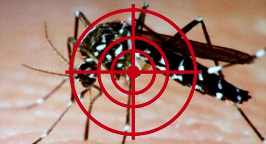 DC Community Led Mosquito Prevention Program