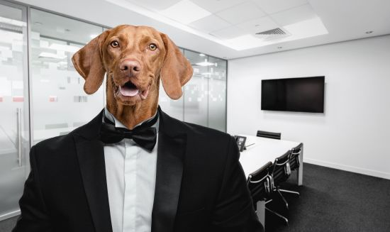 Buster In The Boardroom?