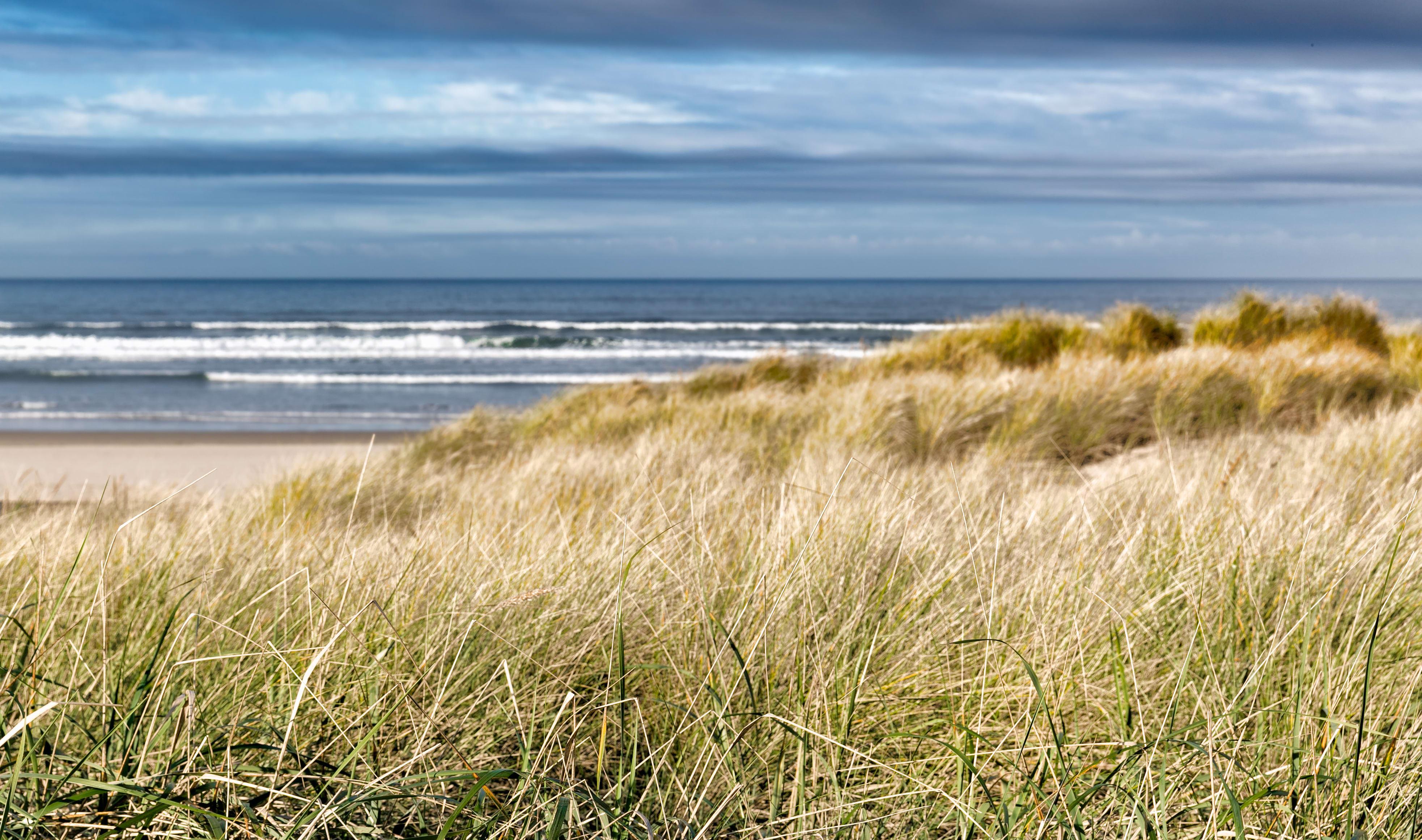 Dune and dune grass at Gearhart beach